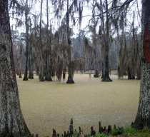 bayou-at-morning